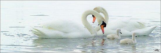 Swan Heart II by Theodore Black