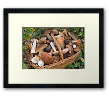 musrooms (Boletus scaber, aurantiacus, edulis).  Framed Print