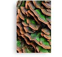 mushrooms (Trichaptum biforme) Canvas Print