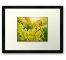 Love Among The Daffodils Framed Print