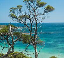 Ti-Tree over the Beach by metriognome