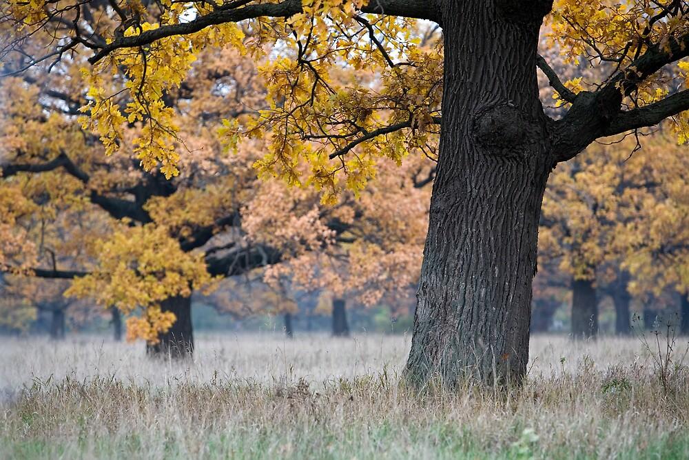 autumn landscape by vkph