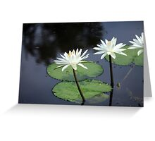 Lillies on the pond Greeting Card
