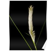 A single grass.... Poster