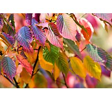 multicolored autumn leaves Photographic Print