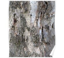 Gum tree bark 4 Poster