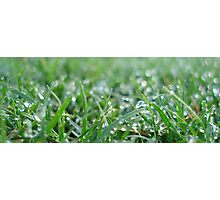 Grass Photographic Print