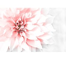 Fade to pink Photographic Print