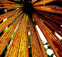 Rusty Colours of a Licuala Fan Palm by Marilyn Harris