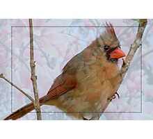 Cardinal in Japanese Magnolia Photographic Print