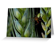 spider nature Greeting Card