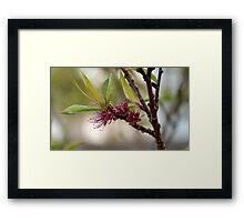 Spring, Apple flowers Framed Print