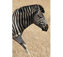 The Stripes Have It Photographic Print