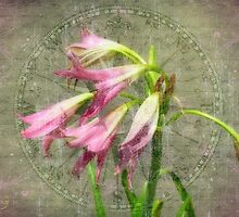 Encompassed Lilies by boogboog2