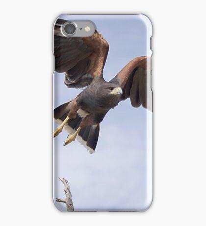 Harris Hawk taking Flight  iPhone Case/Skin