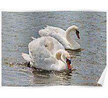 Mr & Mrs Swan Poster
