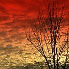 Sky on Fire by Cricket Jones