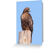 Rufous Morph Red-tailed Hawk Greeting Card