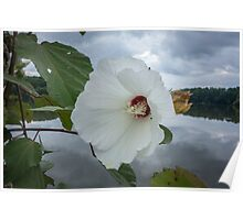 White flower by lake Poster