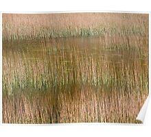 Acadian Grass Poster