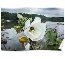 Bee inside white flower Poster