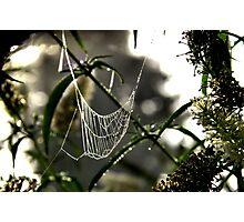 A Mornings Webb Photographic Print