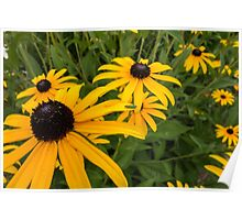 Green insect on yellow flower Poster