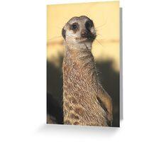 Meerkat, Adelaide Zoo. Greeting Card