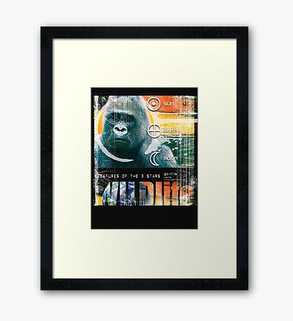 wildlife gorilla Framed Print