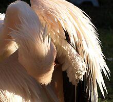 Pelican Preening by Franco De Luca Calce