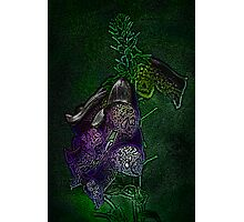 Purple, for you... Photographic Print
