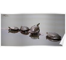 Family of turtles Poster