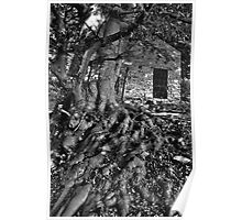 Old Beech Tree Poster