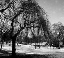 Cold Mornings by LMcCPhotography
