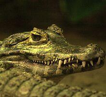 Alligator Teeth by Franco De Luca Calce