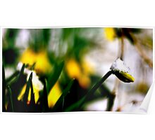 Snow On A Flower Poster