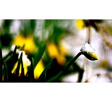 Snow On A Flower Photographic Print
