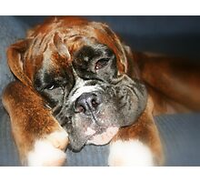 Nap-time -Boxer Dogs Series- Photographic Print