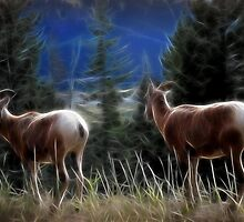 Rocky Mountain Sheep by Vickie Emms