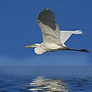 The Great White Egret Calendar by Marvin Collins