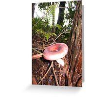 Pink Mushroom in Queensland Greeting Card