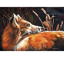 For Fox Sake Photographic Print
