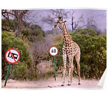 """""""IS THIS A EDUCATIONAL SIGN"""" am I taller? my speed should be OK ! Poster"""