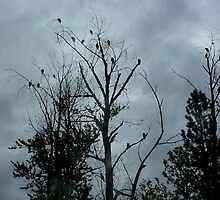 Twenty One Buzzard Waiting in a Tree for Susie and Me by Chuck Gardner