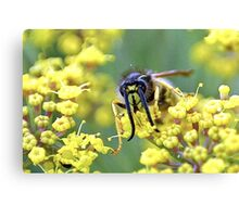 Fennel feelers Canvas Print