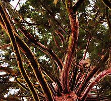 Red Wood Tree by PsyrahArisu
