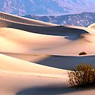 Dunes by Anne  McGinn