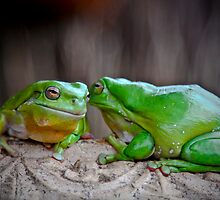 Frog Tales by Robert Sturman