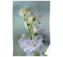 Blue Delphiniums Poster