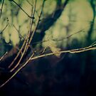 #018 by Paul Desmond